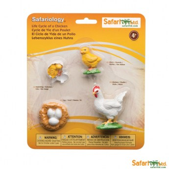 safariltd-life-cycle-of-a-chicken-662816-0