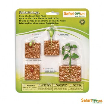 safariltd-life-cycle-of-a-green-bean-plant-662416-0